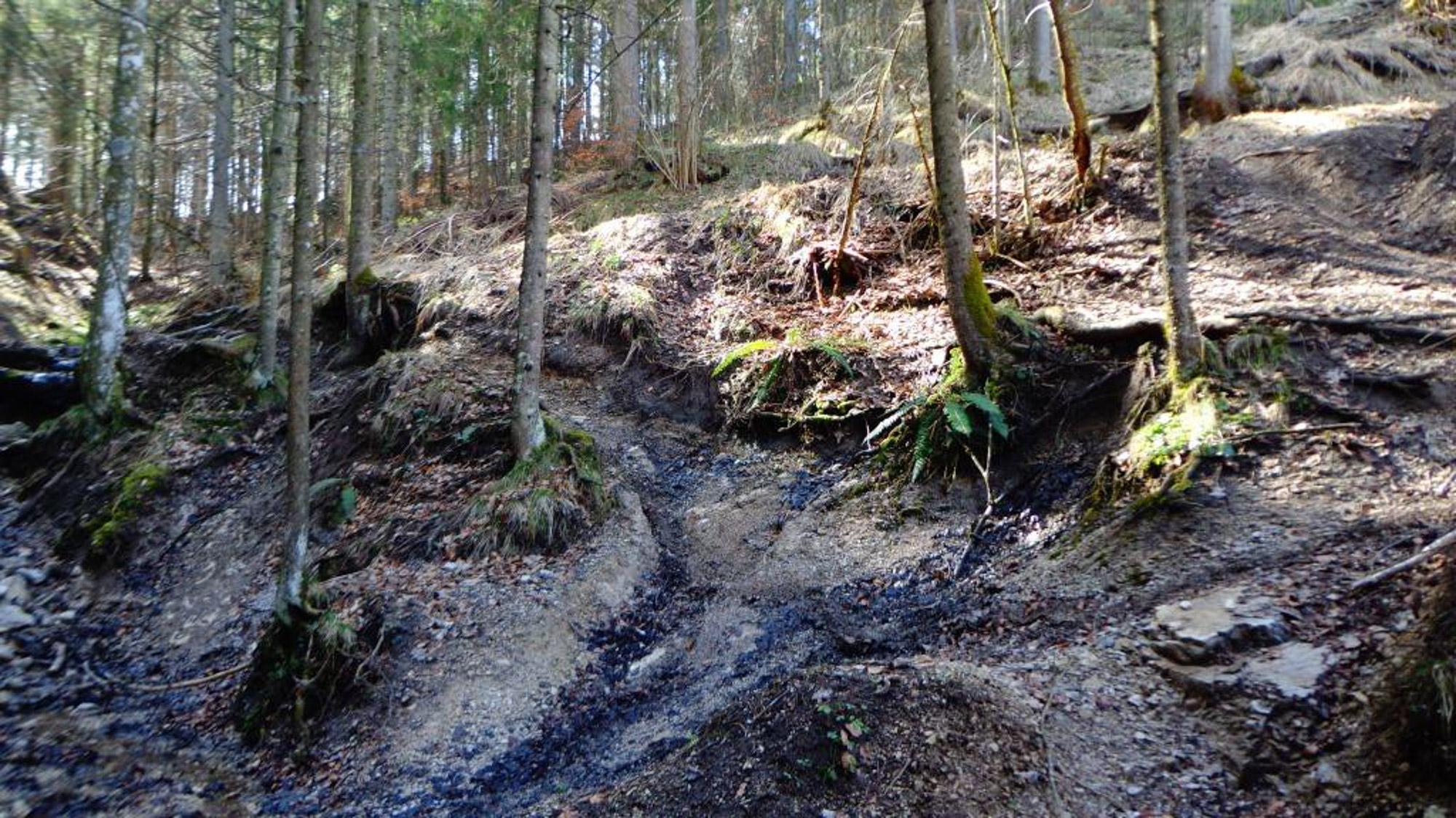 Trialhof Schaureith in Lunz am See